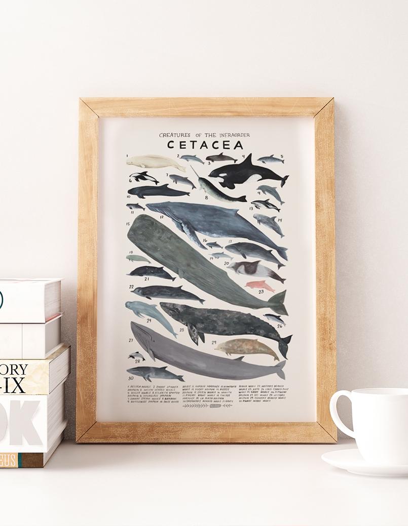 Mix & Match - Affiche baleine ©Fraise & Basilic